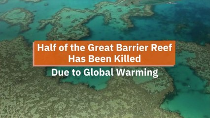 Losing The Great Barrier Reef