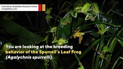 Frogs gone wild