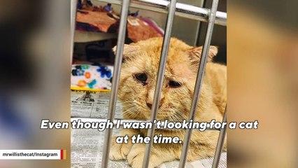 'Saddest' cat is finally living the good life