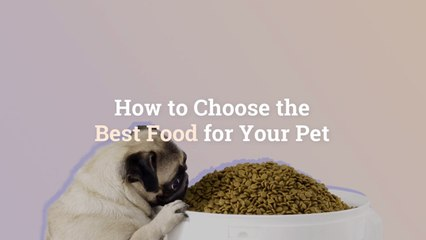 How to Choose the Best Food for Your Pet