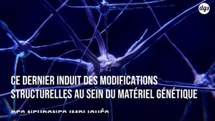 Découverte d'un mécanisme moléculaire lié à la formation de souvenirs