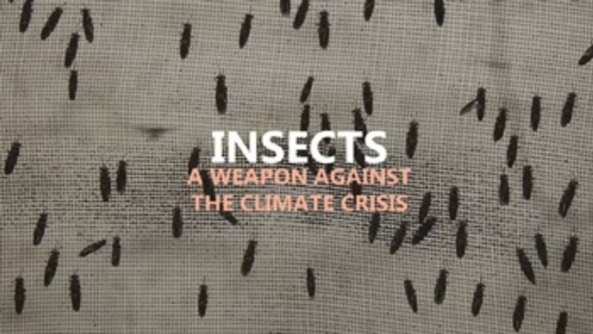 An army of soldier flies to tackle the climate crisis