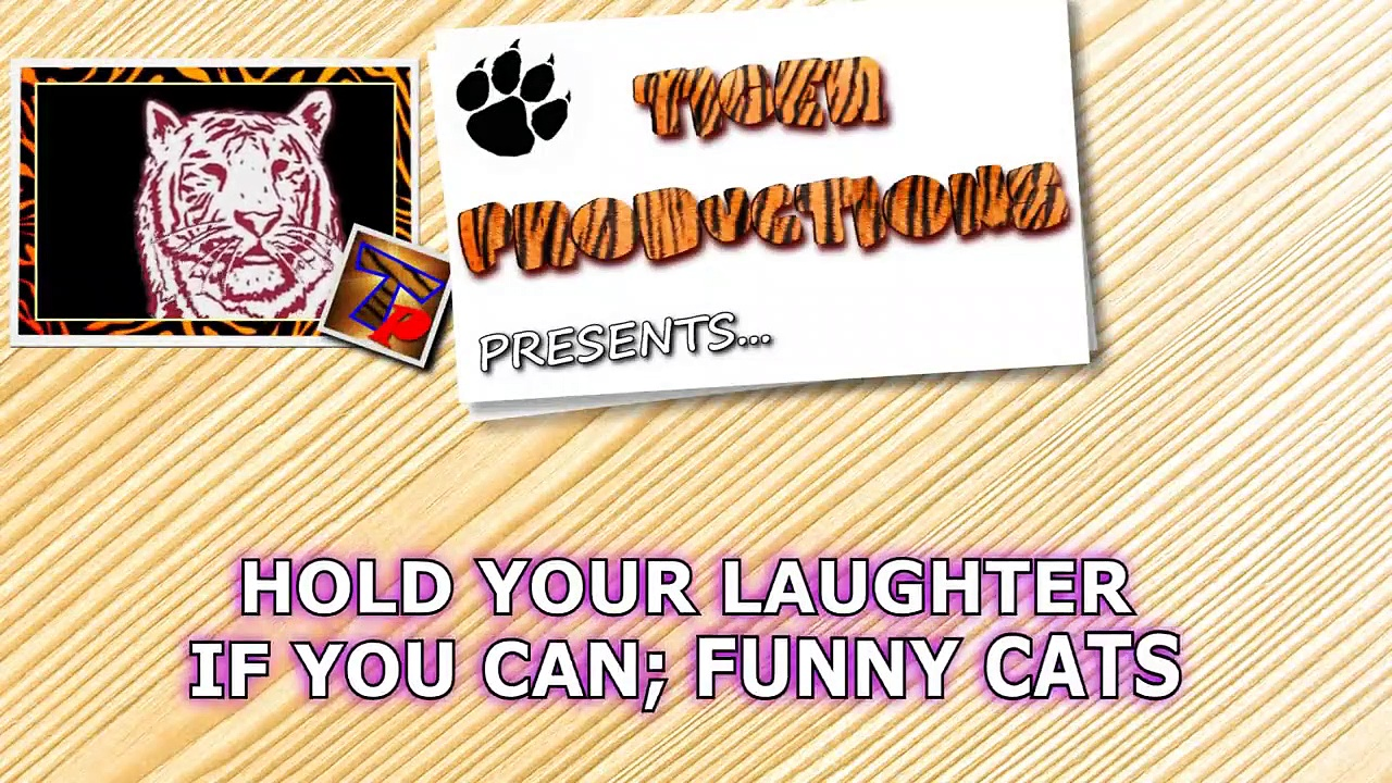 Funny CATS COMPILATION – HOLD YOUR LAUGH IF YOU CAN