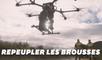 WWF Australie replante les brousses avec des drones après les feux dévastateurs