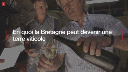 En quoi la Bretagne peut devenir une terre viticole