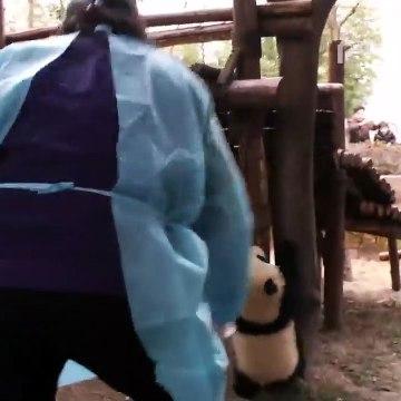 Broadcast Top Highlights (Panda-Tv)