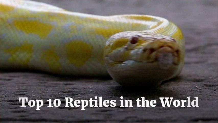 It's Reptile Day