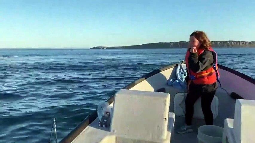 Incroyable ! Des baleines sautent hors de l'eau devant des touristes
