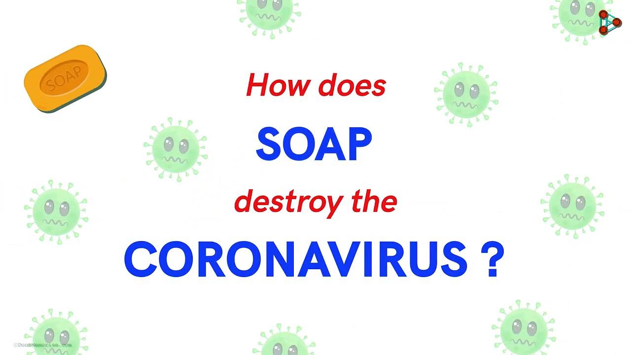 How Does Soap Destroy Coronavirus – Coronavirus