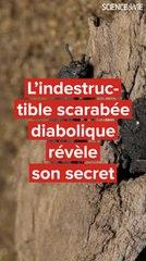 L'indestructible scarabée diabolique révèle son secret