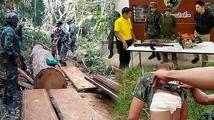 ป่าไม้-ทหารพราน ปะทะเดือด กองกำลังลักลอบตัดตะเคียนทอง จับผู้ต้องหาได้ จนท.ถูกยิงบาดเจ็บ
