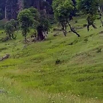 sharda forest neelum valley