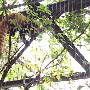 ドキュメント72時間  2020年10月30日 川崎 丘の上の動物公園