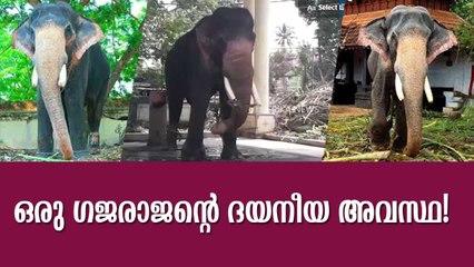 ഒരു ഗജരാജൻ്റെ ദയനീയ അവസ്ഥ! Ambalappuzha Vijayakrishnan Elephant