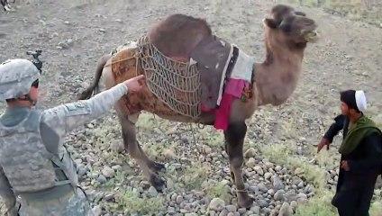 Afghan Camel Kicks a US Soldier in Afghanistan