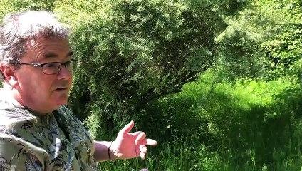 Comment faire revenir les oiseaux dans nos campagnes ? Les conseils d'un ornithologue amateur haut-savoyard