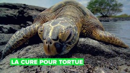 Le luxueux hôtel des tortues