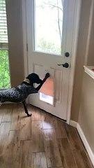 Clever Dog Unlocks Doggy Door
