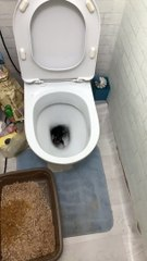 Scurrying Surprise Found in Toilet