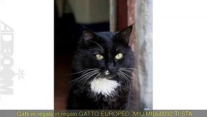 In regalo GATTO EUROPEO: MIUu0027