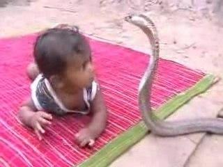 India baby vs Cobra Snake