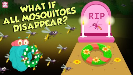 What If All Mosquitoes Disappear?   World Without MOSQUITOES   The Dr Binocs Show   Peekaboo Kidz