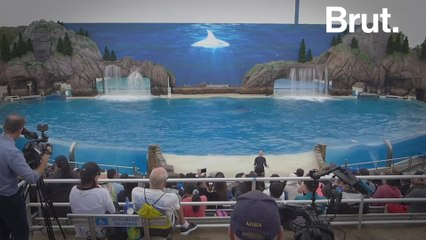 In some countries, the captive marine mammal industry continues to grow