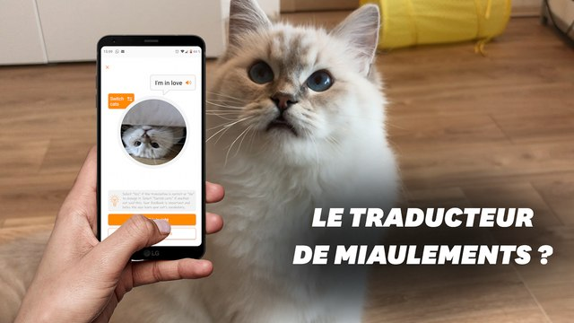 Que vaut Meow Talk, l'application qui traduit les miaulements de chat ?