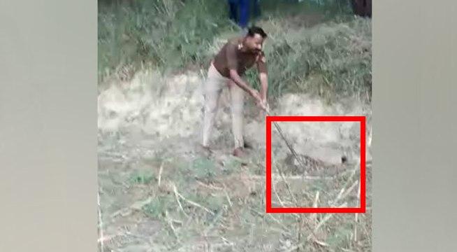 जहरीले सांप पकड़ने में माहिर है यूपी पुलिस का यह दरोगा, खेत में अजगर को कैसे पकड़ा देखिए वीडियो