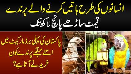 Insano Ki Tarah Batain Karne Wale Birds - Qimat 5.5 Lakh Tak - Pakistani Ki Pehli Bird Market