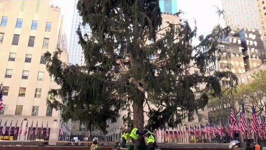 Rockefeller Center's Scraggly Christmas Tree Is Perfect For 2020 - video dailymotion