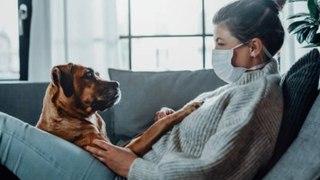 Los dueños de perros tienen un mayor riesgo de contraer COVID-19, según un estudio