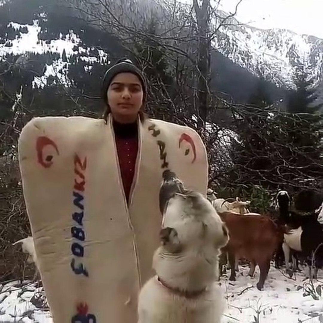 KANGAL KOPEGi ile COBAN YEMiNi - KANGAL DOG and SHEEP GRiLL