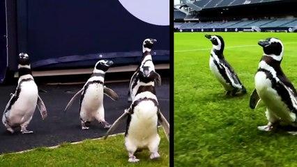Penguins invade Soldier Field