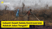 Industri Sawit Selalu Kontroversial, Adakah Jalan Tengah? | Narasi Newsroom