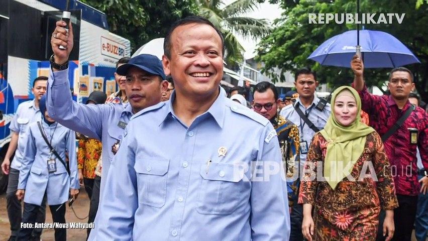 KPK OTT Menteri KKP Terkait Ekspor Benih Lobster