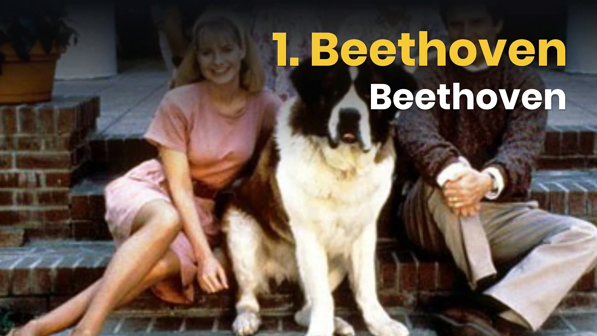 10 famous dogs in movies and TV