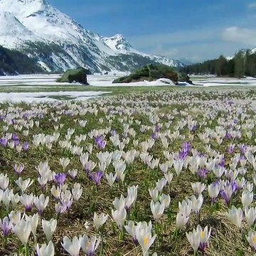 Wildest Europe S01E03 - The Alps