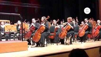 Un chat va voir des musiciens en plein milieu d'un concert