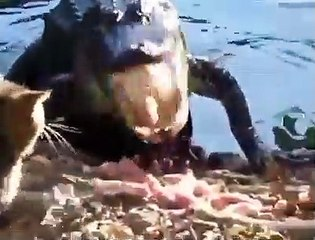 Un petit chat tient tête à un crocodile énorme en train de manger