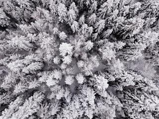Les forêts du Vercors enneigées
