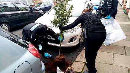 Officers seize hundreds of cannabis plants in raid at Northampton terraced house