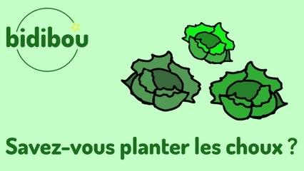 Bidibou - Savez-vous planter les choux ?