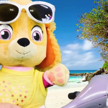 Paw Patrol Go Swimming on a Hot Day and Learn about Money and Responsibility