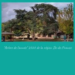 Carte de vœux 2021 du CH Théophile Roussel de Montesson - Arbre de l'année