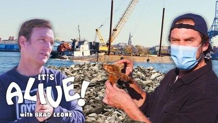 Brad Restores Oyster Reefs