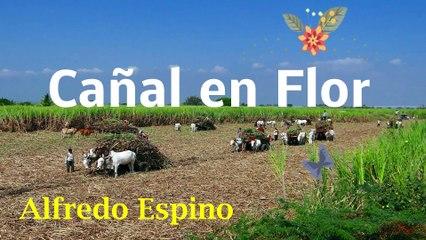 CAÑAL EN FLOR ALFREDO ESPINO    Poema Cañal en Flor de Alfredo Espino    Valentina Zoe Poesía