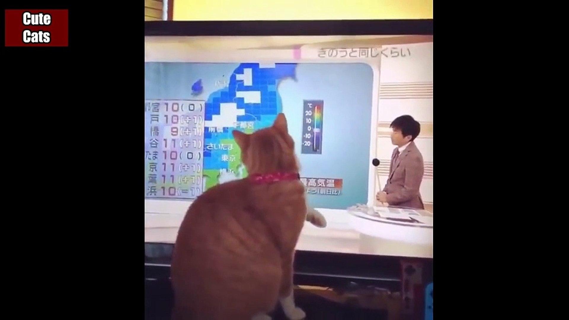 Cats cats Funny Videos #8 - Funny Animals - Cute cats - Funny cats