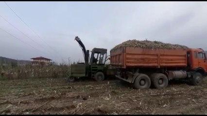 Berat/ Po korrte misër në parcelë me të atin. Bie në kontakt me korrentin, humb jetën 16-vjeçari
