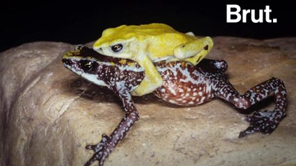31 species are extinct, and thousands more endangered
